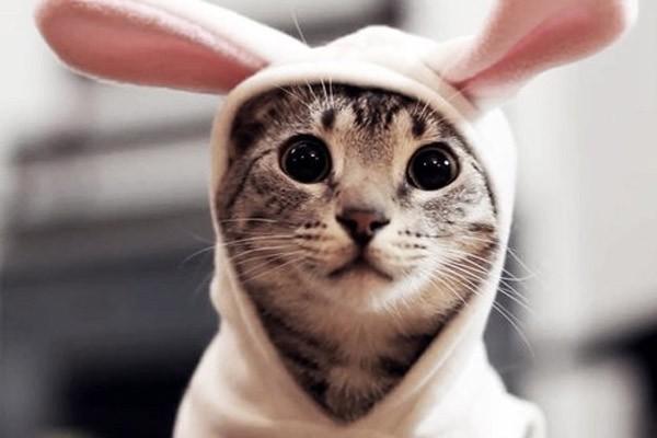 Cómo darle una píldora a un gato