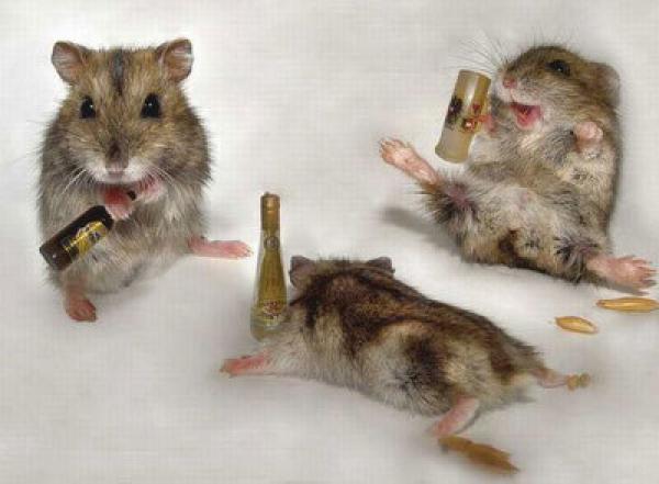 Tres ratas están en un bar y…