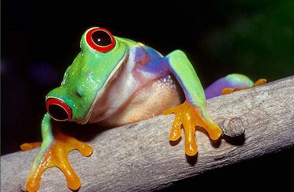 El chiste de la rana aplastada