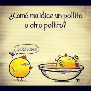 pollo-pio-chistes-pollos-L-S4NdPq